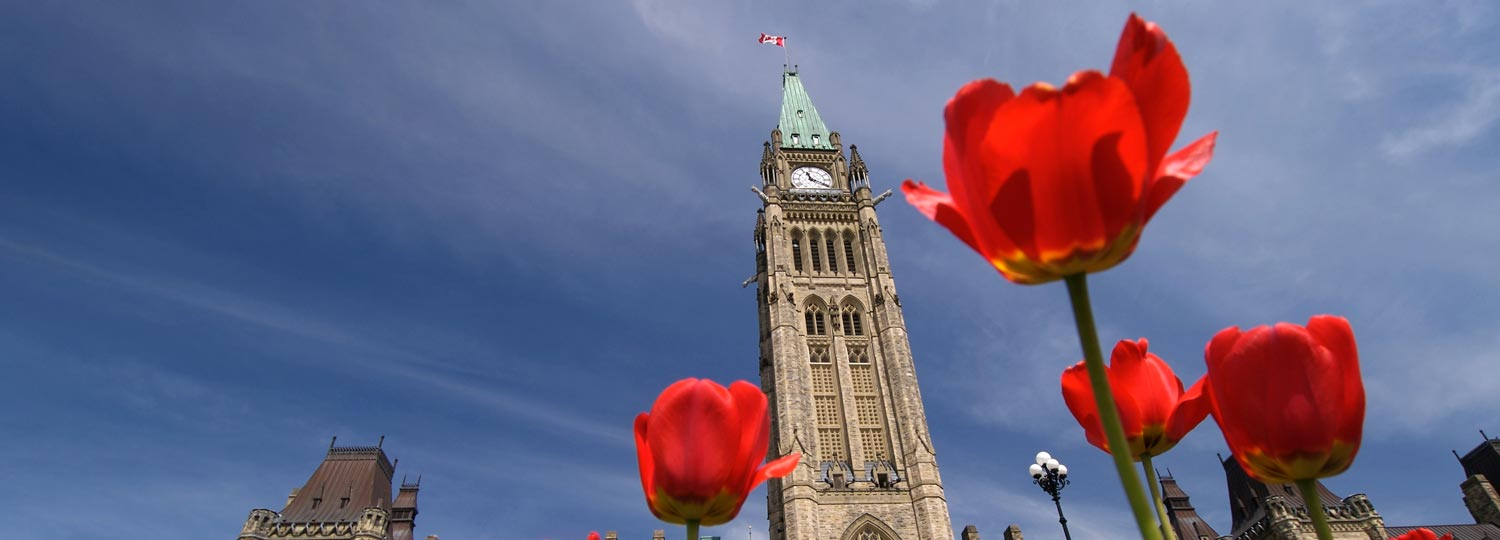 The Canadian Parliament Buildings framed by Red Tulips in the Spring in Ottawa, Ontario — the nation's capital.